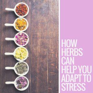 adaptogens, herbs, stress