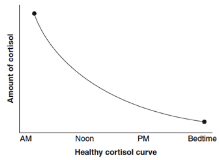 A cortisol curve when your adrenals are operating normally.